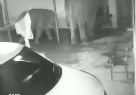 खाने की तलाश में घर में घुस गया हाथी और उसका बच्चा, फिर दिखा हैरान करने वाला नजारा