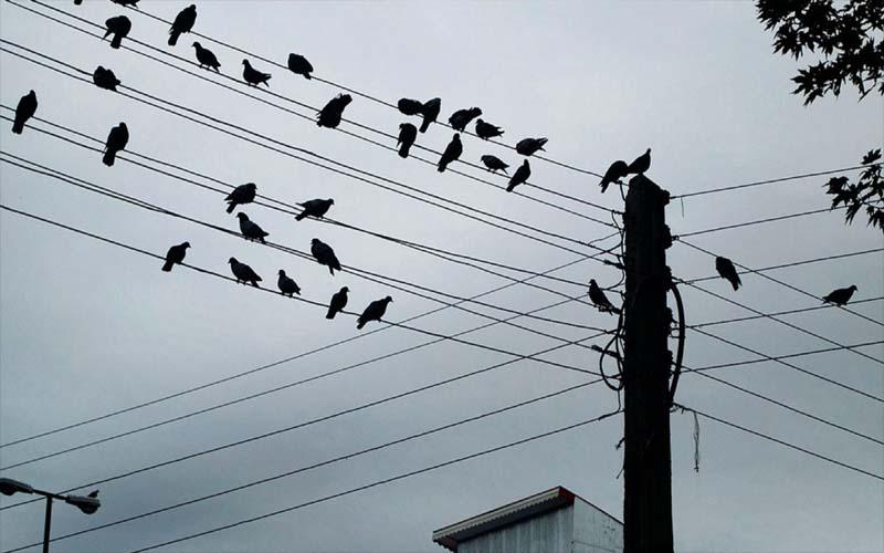 बड़ा खुलासा: इसलिए तारों पर बैठना पसंद करते हैं पक्षी, आप भी जान ले ये बड़ा कारण