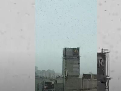 दिल्लीवालो हो जाओ सावधान! राजधानी पर किया टिड्डी दल ने Attack