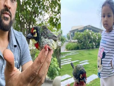धोनी के साथ मिलकर बेटी जीवा ने बचाई चिड़िया की जान
