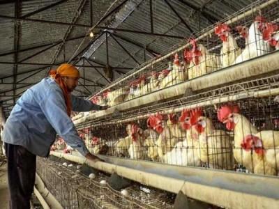 Bird Flu in Delhi: दिल्ली में बर्ड फ्लू की दस्तक, 8 पक्षियों की रिपोर्ट आई पॉजिटिव