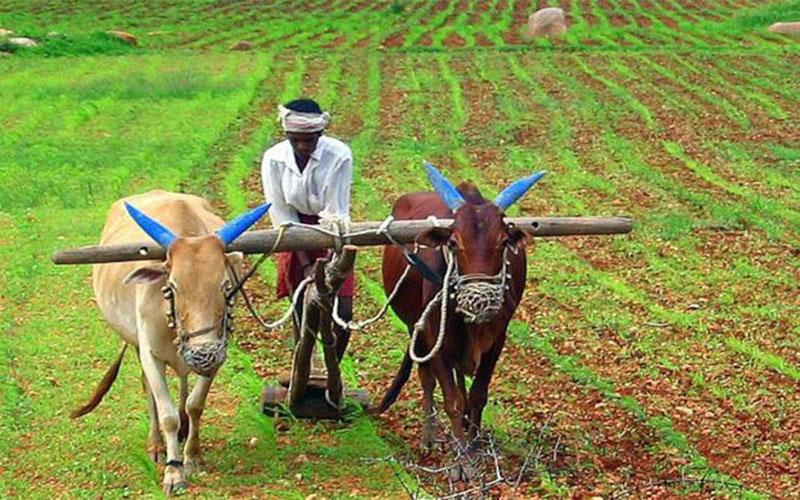 PM Kisan Yojana : 42 लाख अपात्र किसानों के खाते में ट्रांसफर हुए 3000 करोड़